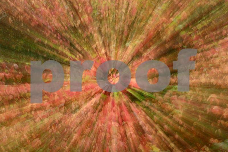 Dogwood zoom  6014