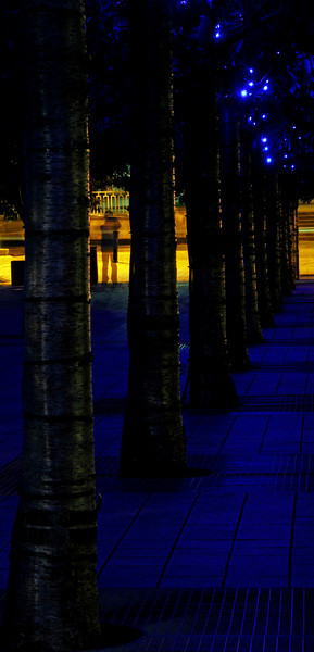 Row of trees illuminated with blue lights in Jubilee Square - London, England