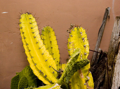 Cacti - don't touch !