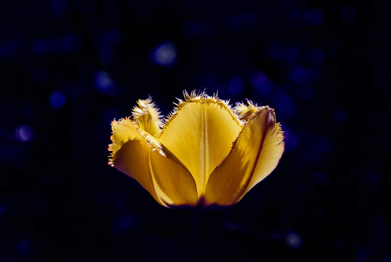 Lone Yellow Flower