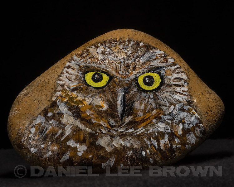 Burrowing Owl acrylic painting on a rock.