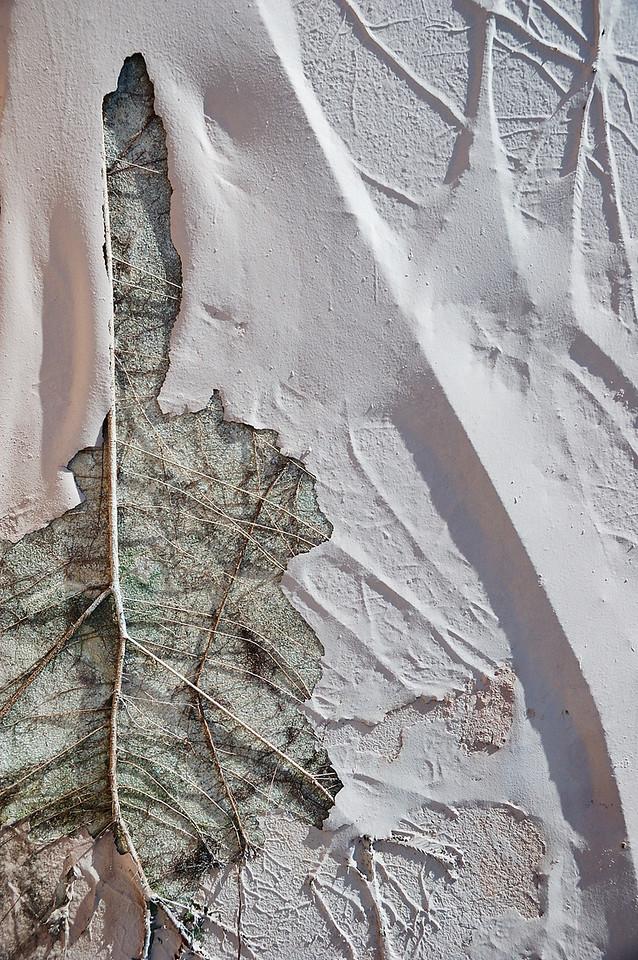 Racines d'un arbre sur le toit se faisant un chemin sous la peinture de la maçonnerie.