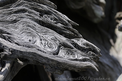 Wood waves near the beach