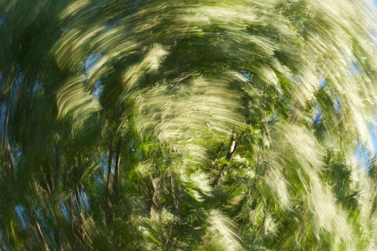 Tree go around<br /> Playing_2010-12-19_18-24-37_DSC_3866_©RichardLaing(2010)
