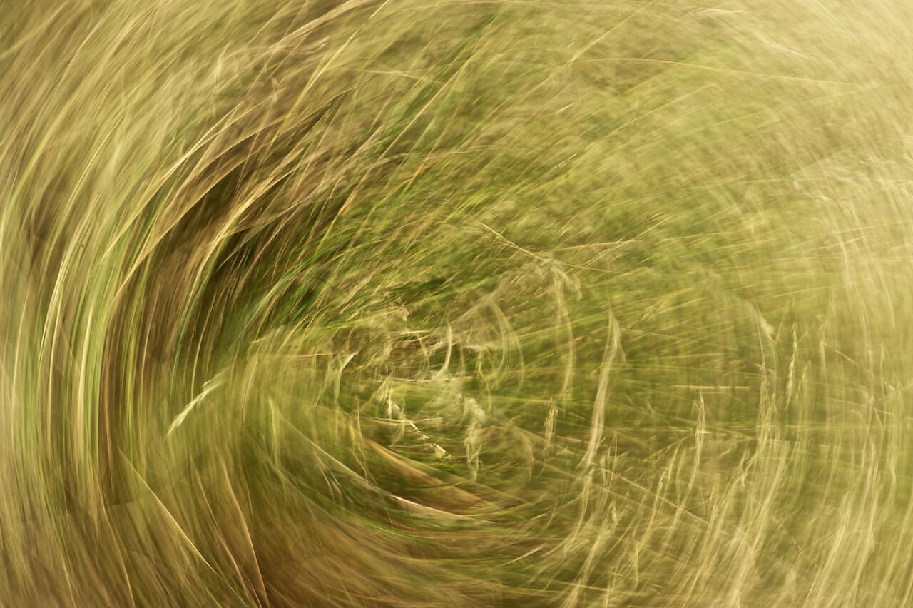 Around the grass<br /> Playing_2010-12-19_18-26-10_DSC_3875_©RichardLaing(2010)