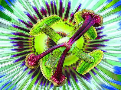 Passion flower, abstract, art, painting, watercolor, passi floura
