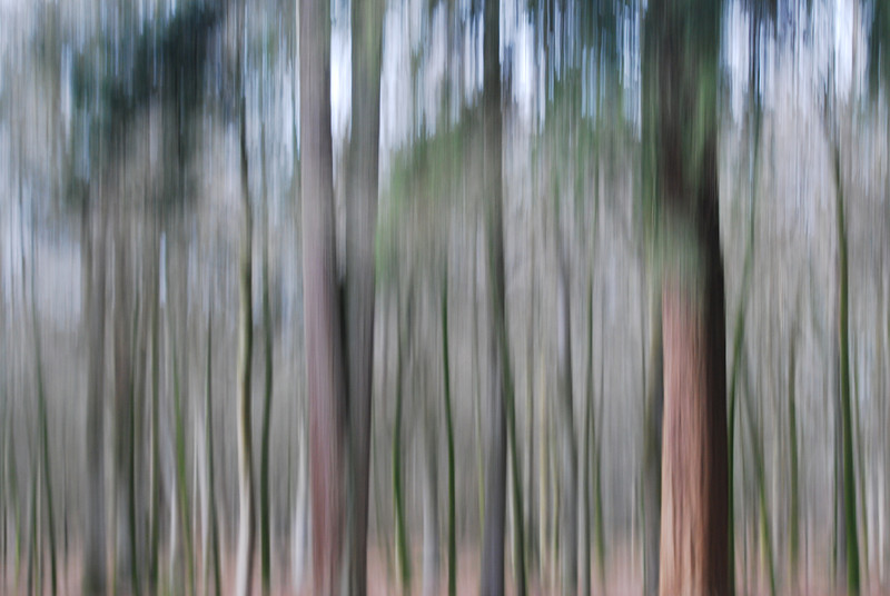 THE MAGIC FOREST (1)