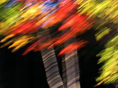 Foliage Blur