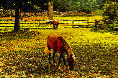 horse, stamford museum, stamford ct, painting, horses, abstract, colors, fall, spring, farm, pasture