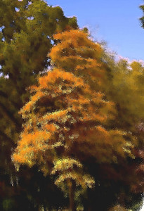 orange, watercolor, poster, art, abstract, tree, fall, autmn color, foliage, park, stamford museum, summer, colors, painting