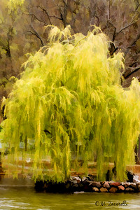 Hubbard park, Meriden ct, painting, watercolor, abstract, water, lake, tree, willow, weeping, weeping willow, yello, spring, colors