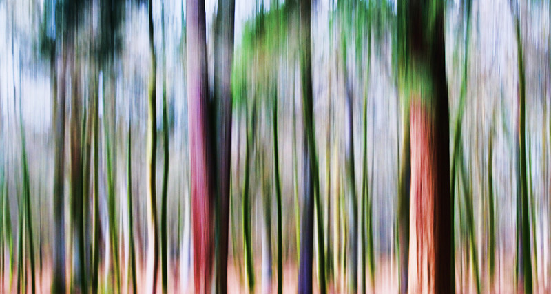 THE MAGIC FOREST (2)