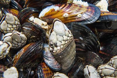 """""""Shell Life"""""""