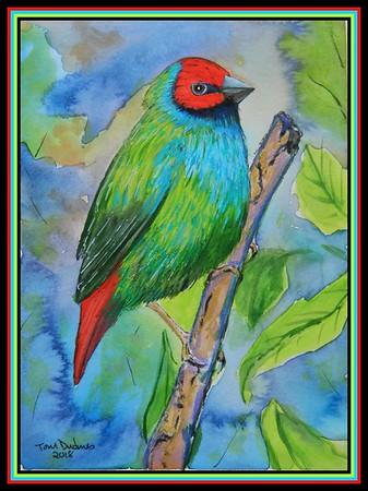 1-Fiji Parrotfinch,Erythrura pealii  150x200mm, watercolor & mixed media, sep 19, 2018 Ivereimi Rogoira, Sigatoka, Fiji, sep 20, 2018