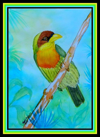 1-Lemon-throated Barbet, Brazil, 6x8 5, watercolor, nov 14, 2015  Adopted by Gillerto Muller, Porto Alegre, Brazil, 7 18 2018