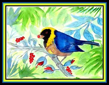 1-Golden-collared Tanager - Peru, 8 5x6, watercolor, nov 9, 2015  adopted Doris Valencia, Wanchaq-Cusco, Peru, july 17  2018