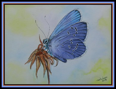 1-Adonis Blue, Europe  150x200mm, mixed media, sep 17, 2018 adopted Eric Delgado, Soleuvre, Luxembourg, sep 18, 2018 DSCN9818A