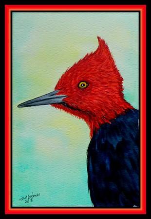 1-Magellanic Woodpecker, Campephilus magellanicus  Patagonia & Tierra del Fuego 155x230mm, watercolor,acrylic & ink, july 26, 2018 DSCN9953a