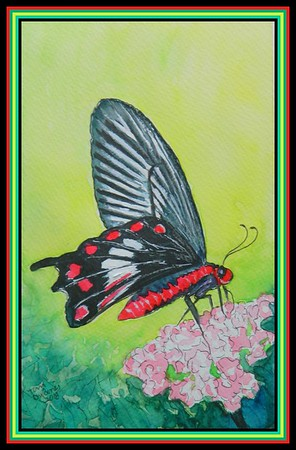 1-Common Rose, Pachliopta aristolochiae - Bangladesh 155x225, watercolor, acrylic & ink, july 14, 2018 adopted Rabiul Hassan Dollar, Chapainawabganj, Bangladesh DSCN9896-A