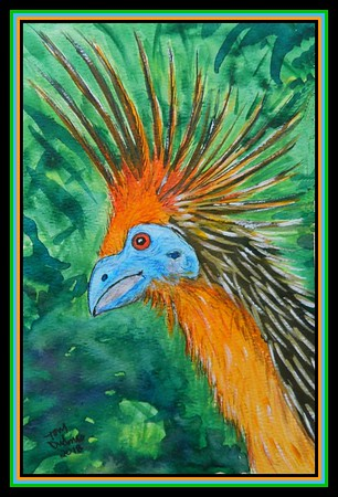 1-Hoatzin, Guyana  155x230mm, watercolor, acrylic, color pencil & ink, july 30, 2018 adopted by Cosmata Lindie, New Amsterdam, Guyana, mailed may 13, 2019