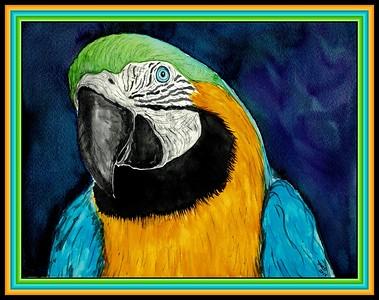 1-Blue & Gold Macaw, 9x11 5, watercolor & ink, feb 22, 2018 jan 8, 2019