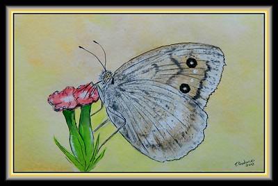 1-Macedonian Grayling, 140x215mm, watercolor, acrylic, ink, dec 18  2018 mailed dec 19, 2018, Nicola Micevski, Skopje, Macedonia DSCN0189A