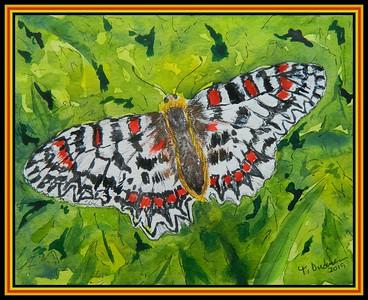 1-La Proserpine, Zerynthia rumina, 5 5x7, watercolor, color pencil & ink, oct 11, 2019 Martine Orian-julien, Auriole, FranceDSCN9771A