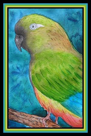 1-Burrowing Parrot, Argentina - 5 5x8 5, watercolor & ink, jan 2, 2020  to Patricia M Gonzalez, Rio Negro, Argentina, jan 3, 2020  Pict0012