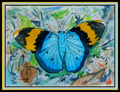 1-Gold Banded Forester (Euphaedra neophron)  Tanzania  4 5x6, watercolor, acrylic & ink, dec 5, 2018 DSCN0164