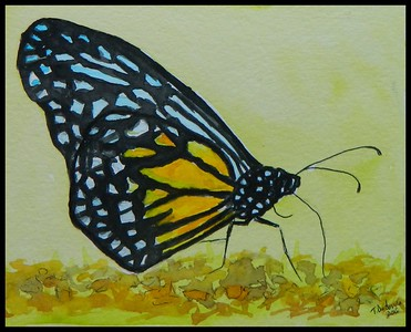 Singapore - Yellow Glassy Tiger, malaysia, 150x115, watercolor & acrylic, may 2, 2018. Adopted Bob Cheong, Singapore,  may 8, 2018. Status UNK