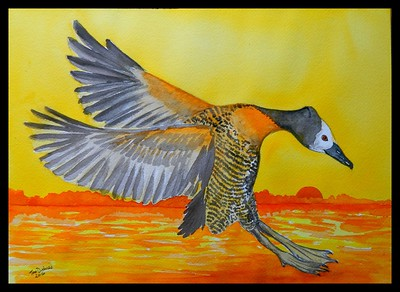 Johannesburg, South Africa - White-faced Whistling Duck, 10x14, watercolor, june 12, 2016.  Gift to  Malcolm Hendersen, Johannesburg, South Africa, oct 8, 2016. Rec'd OK