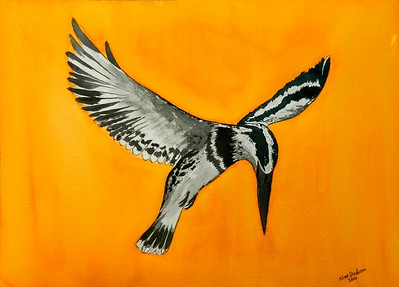 Cape Town, South Africa - Pied Kingfisher - Africa, 10x14, watercolor, june10, 2016.  Gift to Linda Hibben, Cape Town, South Africa,  Oct 1, 2016. Rec'd OK