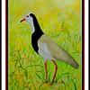 1-Long-toed Lapwing, 11x15, watercolor, may 2, 2017 DSCN99741