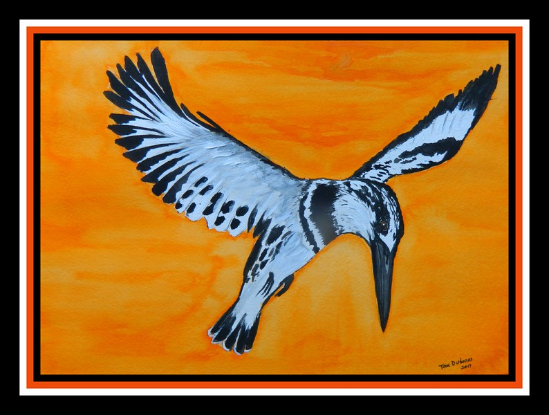 1-Pied Kingfisher, 10x14, watercolor, may 29, 2017 DSCN0038