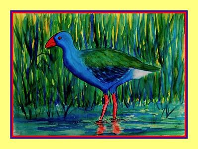 1-African Purple Swamphen, 10x14, watercolor, feb 20, 2017 DSCN99071