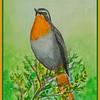 Cape Robin-chat, 6x9, watercolor, feb 23, 2017 Dscn9908