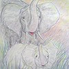 African Elephants, color pencil, 11x14  start 1981, completed mar 9, 2014 CIMG9499tt