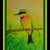 1-Little Bee-eater, 6x9, watercolor, june 2, 2017 DSCN00481