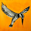 1a-Pied Kingfisher - Africa, 10x14, watercolor, june10, 2016 DSCN9965