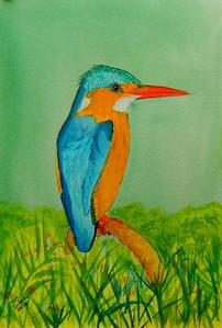 Malachite Kingfisher, 5x7, watercolor, june 15, 2016 DSCN9994-1