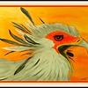 1-Secretary Bird #2  11x14, watercolor & pencil, aug 16, 2016 DSCN0309-A