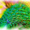 airbrush-4-06-sfzoo-DSC02424