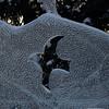 60  G Ice Sculpture Bird Close