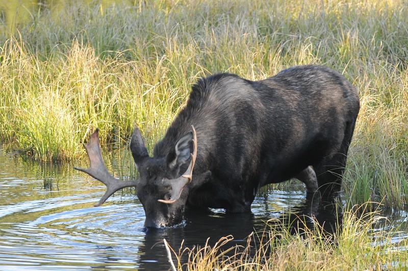 moose alberta canada