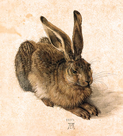 A Young Hare 1502