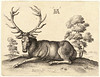 wenceslas_hollar_-_a_stag_lying_after_dc3bcrer_state_2