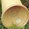 Sound hole of the alpine horn with edelweiss flower painted on the inside resting on the grass