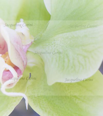 organic skin  , motherhood,  the green petals cradle the spirits that host life