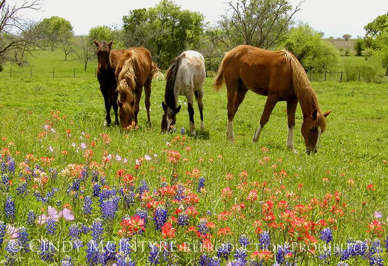 Yearlings and Wildflowers