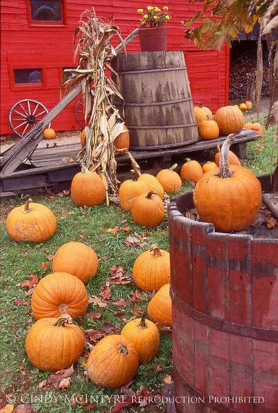 Gaggle of Pumpkins